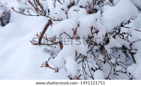 close up of the red-brown baby leaves of tree brances and piles of white frozen snow winter on top of leaves and branches of tree plant coving all the snowflakes on field background in Osaka, Japan #1491121751