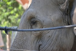Close-up of the sad look of a caged elephant