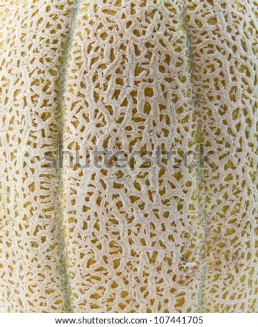 Close up of the skin of a cantaloupe.