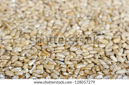 Close up of the sunflower seeds - stock photo