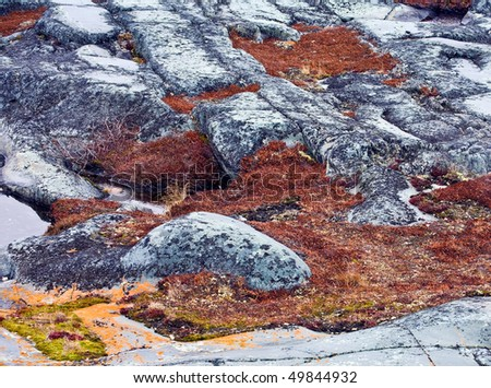 close up of the tundra soil in churchill, canada