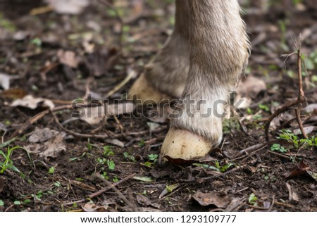 Close-up of the white hooves of a newborn foal