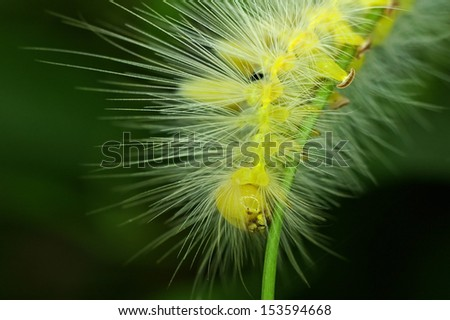 close up of the yellow butterfly worm on the tree leaf
