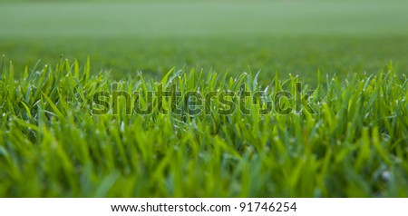 Close up of thick grass.