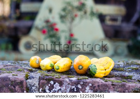 Close up of tiny colorful pumpkins with blurry background of wine grape smasher machinery - Shutterstock ID 1225283461