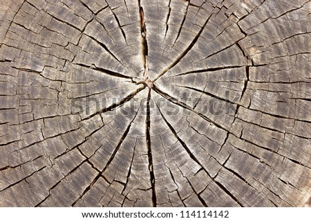Close Up of Tree Stump Background