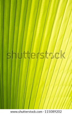 Close up of Tropical Green Leaf with evening sun highlighted the texture use as a Background for Design
