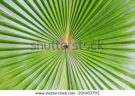 Close up of Tropical Green Leave Texture use as a Background.