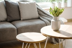 Close-up of tulips on wooden round table in natural grey living room interior with a couch