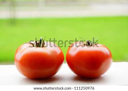 Close-up of two fresh tomatoes