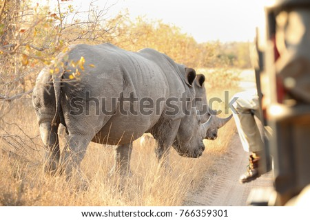 Close up of two White Rhino in a private game reserve in South Africa #766359301
