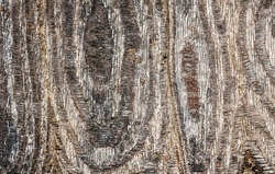 Close up of unusual wood texture. Deep relief, smooth lines, protective impregnation, saturated tones.  Useful for background