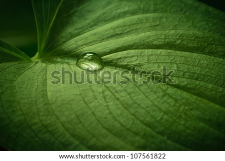 Close-up of water drop on beautiful green leaf