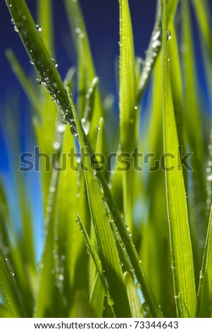 Close-up of water drops on green grass blades.
