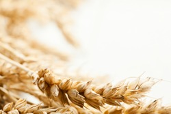 Close-up of wheat ears. Selective focus