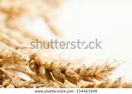 close up of wheat ears....