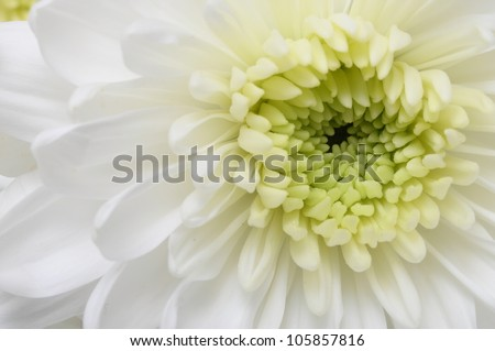Free photos close up of white flower aster with pink petals and close up of white flower aster with pink petals and yellow heart for background or mightylinksfo
