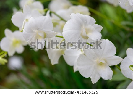 Shutterstock Close up of white orchid.