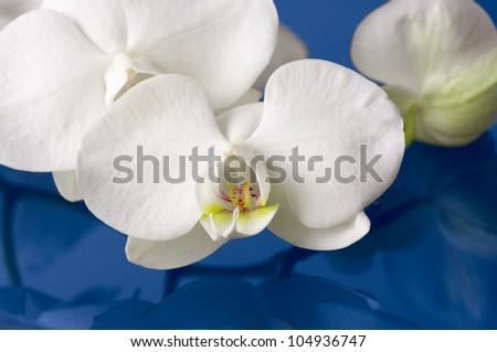 Close-up of white orchids with reflection.