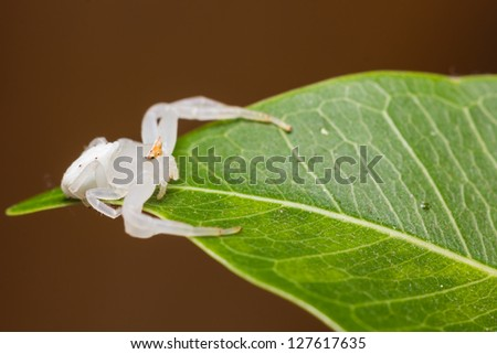 Close up of white spider on green leaf