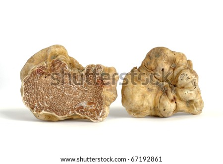 close-up of white truffle (tuber magnatum) isolated on white