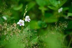Close-up of wild vegetation against a blurry background of green tropical plants. Beautiful nature, flora, exotic rural flora.