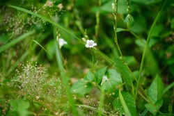 Close-up of wild white flowers against a blurry background of green tropical plants. Beautiful nature, flora, exotic rural flora.