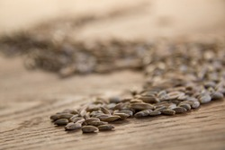 Close up of winter rye and oat seeds on wooden table