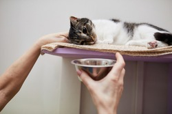Close-up of woman holding bowl with food in front of her cat while it lying on her place