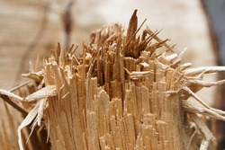 close up of wood slivers after cutting