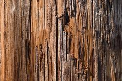 close up of wood telephone pole