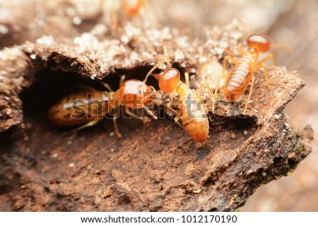 Close-up of worker termites on the forest floor
