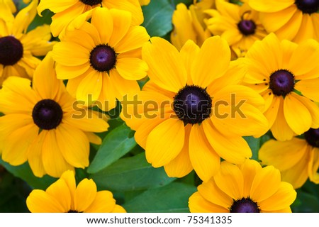 Close-up of yellow flowers