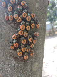 Close up of yellow Ladybird beetle or Ladybug on a tree. Colorful beetle may indicate useful plant chemicals.Insects.