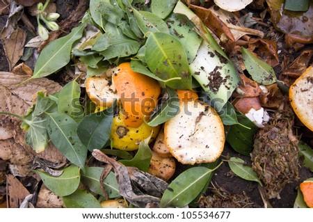 Close Up of Zest on a Compost Heap