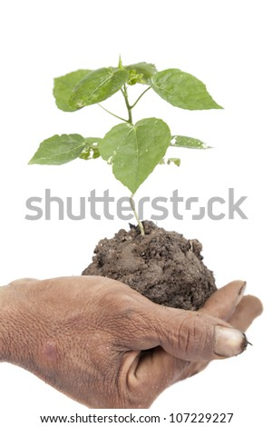 close-up, Old male hand holding a young tree isolated on white