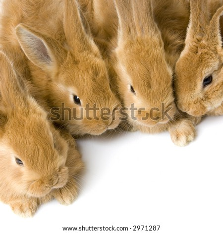 close-up on a group of bunnies in front of a white background
