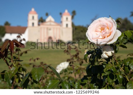 Close up on a pink rose, with the Spanish style Santa Barbara Mission chapel in the blurry background and space for text on the bottom #1225699246