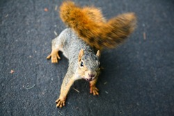 Close-up on a squirrel on a road