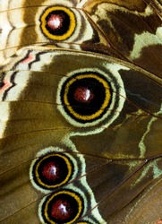 Close up on butterfly wings.