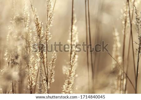 Close up on grasses tops in sunlight  Zdjęcia stock ©