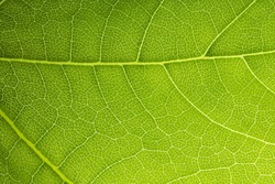 Close up on green leaf texture