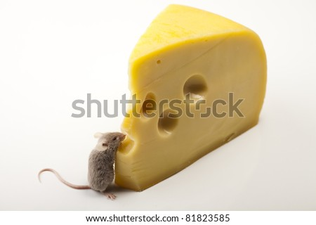 Close up on little mouse and cheese - stock photo
