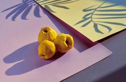 Close-up on ripe sweet Japanese quince fruits on pink and yellow geometric layered paper. Fall color palette, warm and vibrant. Long shadows from the fruits and palm leaves.