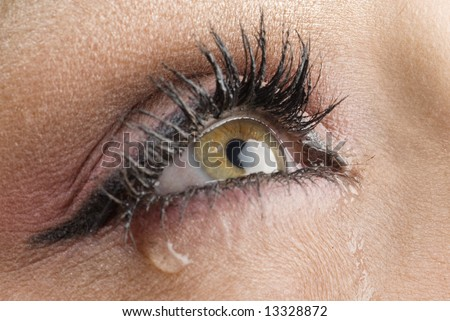 Pictures Of Eyes Up Close. stock photo : close up on the