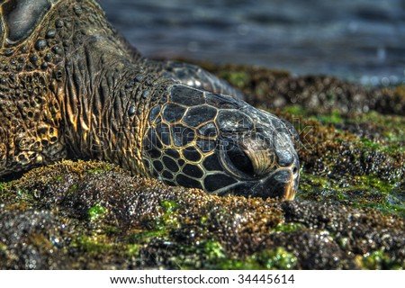 Close-up on the head of a sea turtle. HDR image created by combining three exposures.