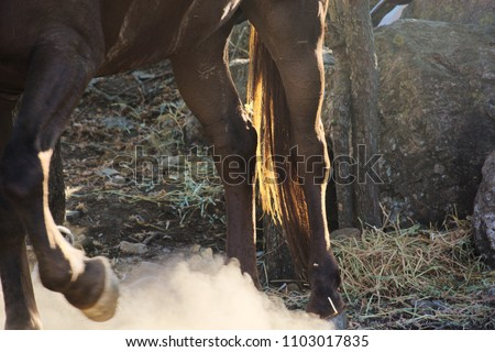 Close up on the stomping feet of a horse, raising dust.