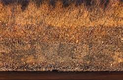 Close-up on the texture of an old Japanese traditional roofing method of thatching named Kayabuki thatched roof using densely packed bulk of dry straw as thick layering in the Buddhist Tamonji temple.