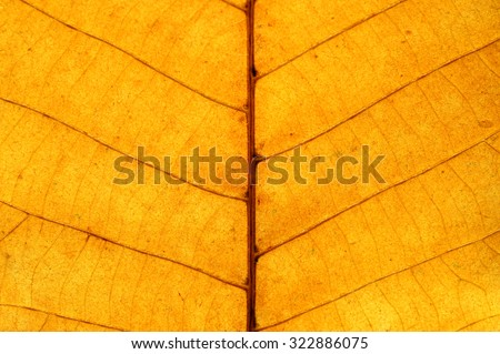 close-up on yellow leaf