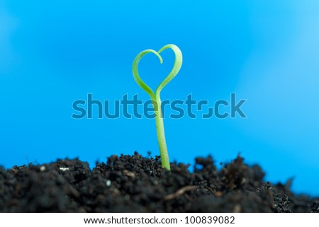 Close-up on young spring seedling growing out of soil - against blue